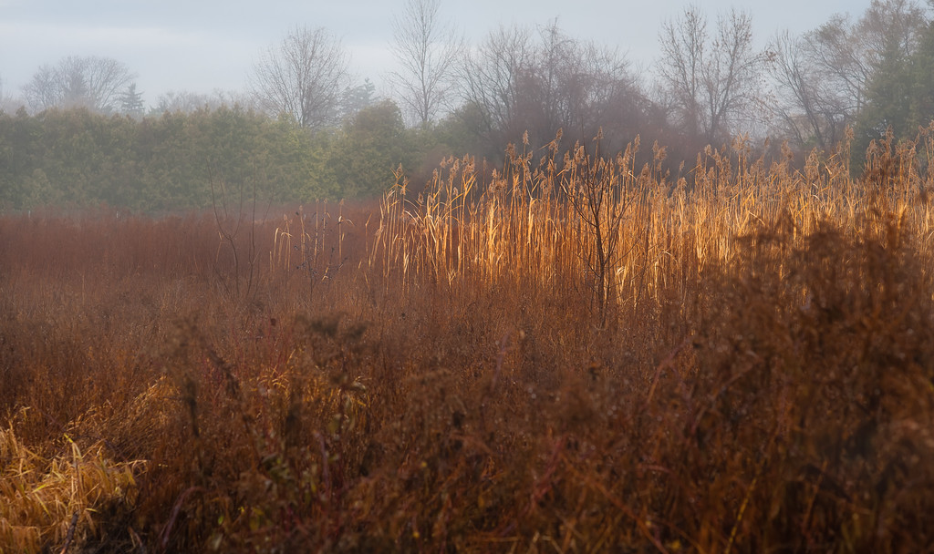 FIELD OF MUTED LATE FALL COLOUR